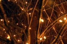 (Holiday lights)