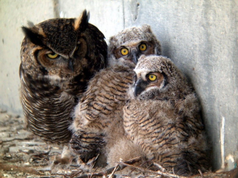 A pair of owls nested on End