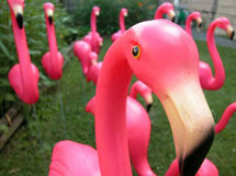 (Photo - flamingo)