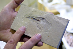 (Photo - Squid Fossil)