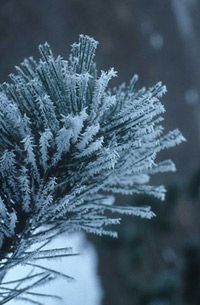 (Image - Winter frost)