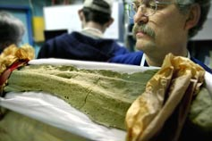 (Photo - Paleontologist with dinosaur bone)