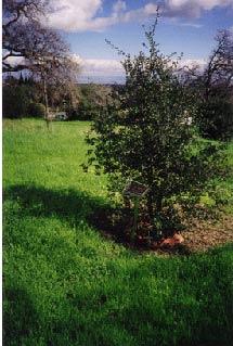 (Photo - tree)