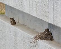 (Photo - owls nesting on SLAC End Station B)