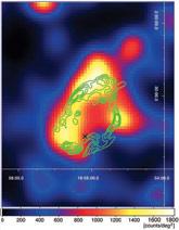 (Image - supernova remnant W44)