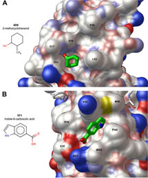 (Image - HIV protease surface with new binding sites)