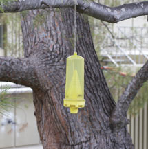 (Photo - wasp trap)