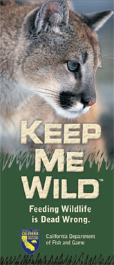 (Image - brochure cover, mountain lion safety)